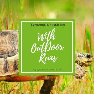 Outdoor Tortoise Runs